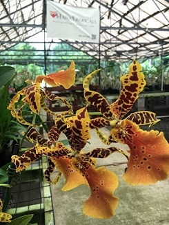 orchid3d.jpg